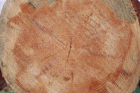 Trees annual rings, nature texture, tree stump Archivio Fotografico