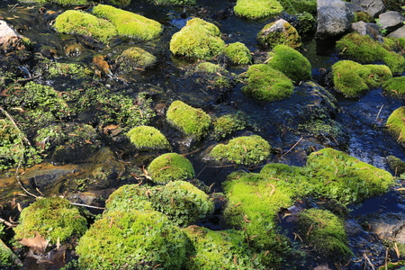 The Moss On The Rocks Banque d'images