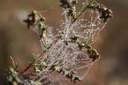 Spider web on a flower Banque d'images
