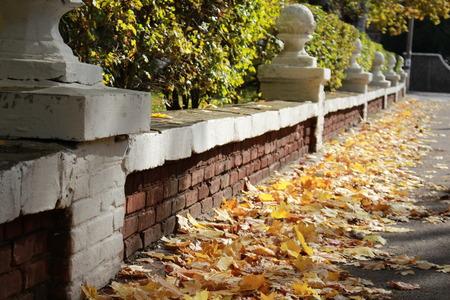 autumn alley Banque d'images