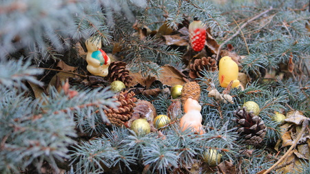 Approaching holiday, time to decorate the Christmas tree.