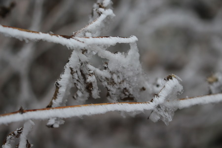 The crystals of frost on the grass