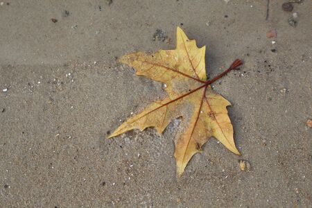 Maple leaf by the river in the wet sand. Nice background. Banque d'images - 132448153