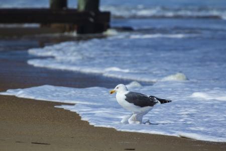 Sea bird at water s edge