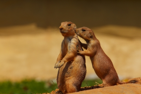 Prairie Dog Friends photo