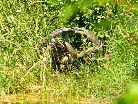 wheel stump