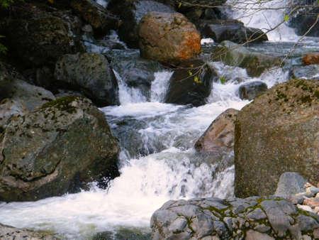 hemlock: mountain stream hemlock Stock Photo
