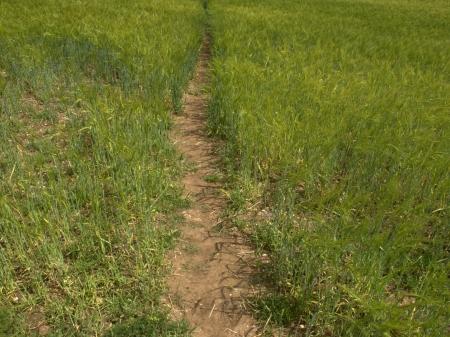 warwickshire: Public footpath crossing a field in Warwickshire Stock Photo