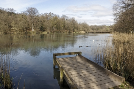 dean: Cannop Ponds, Forest of Dean, Gloscestershire