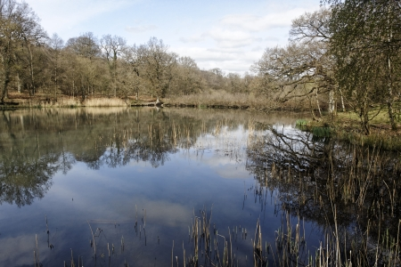 dean lake: Cannop Ponds, Forest of Dean, Gloscestershire