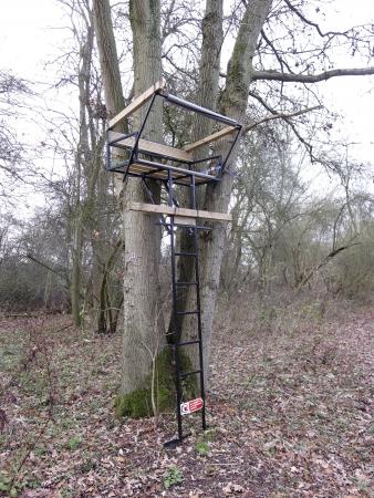 deer in heart: Heart of England Forest, Warwickshire. Deer seats
