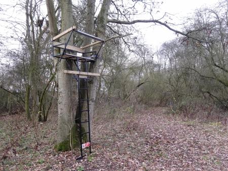 cull: Heart of England Forest, Warwickshire. Deer seats