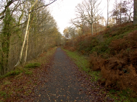 forest railway: Old railway track now walkway, Wyre Forest, Worcestershire, November 2011 Stock Photo