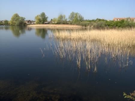 rudd: Rudd lake, Little Paxton nature reserve, Cambridgeshire