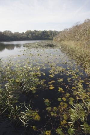 pembrokeshire: Bosherston Fish Ponds, Pembrokeshire, Wales