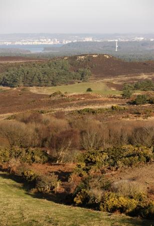 scrub grass: Studland heathland, Dorset, UK