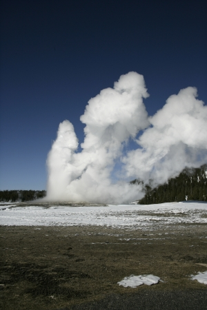 predictable: Old faithful letting off steam, Yellowstone USA. predictable geographical feature