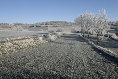 hoar frost: Hoar frost, in central france Stock Photo