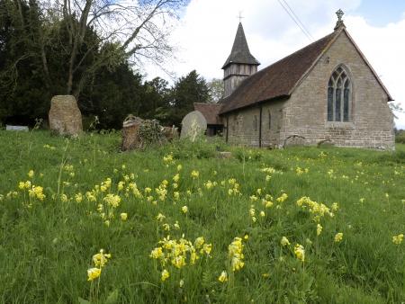 cowslip: Cowslip, Primula veris, flowes in Oldberrow churchyard, Warwickshire, May 2013