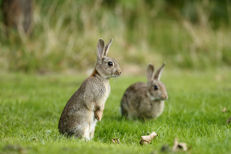 Rabbit close up Stock Photo