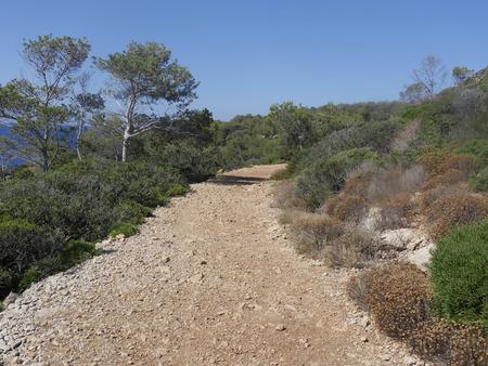 birdwatching: Illa Dragonera, Birdwatching site, Majorca, June 2015