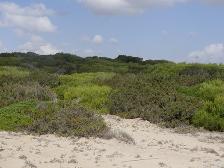 birdwatching: Son Real, pine woodland, Birdwatching site, Majorca, June 2015 Stock Photo