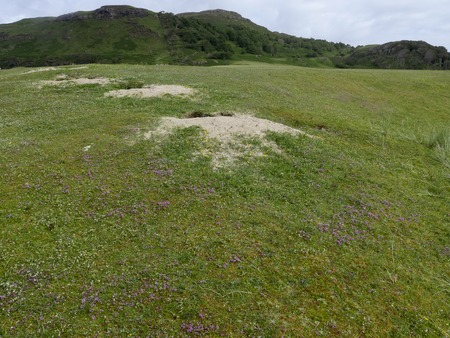 mull: Machair grassland, Calgary Bay, Isle of Mull, Scotland, July 2015