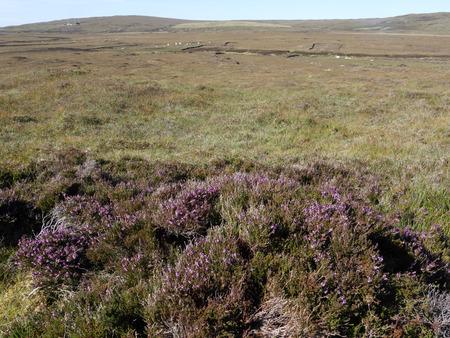 moorland: Moorland, North Uist, Hebrides, September 2015