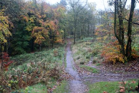 country park: Lickey Hills Country Park, Near Birmingham, November 2015