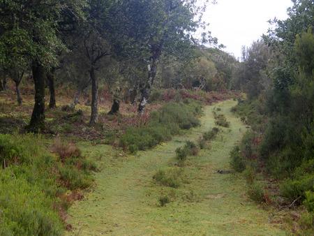 parque: Parque Natural De Maderia, March 2016