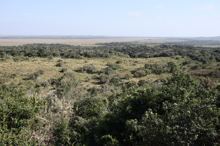 lucia: Isimangalsio Wetland Park, St Lucia, South Africa