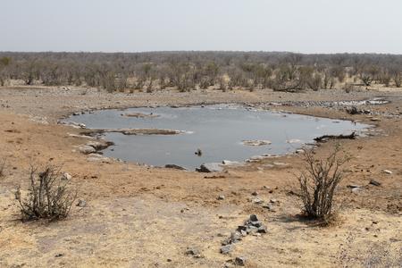 the water hole: Moninga water hole, Halali camp, Etsoha, Nambia