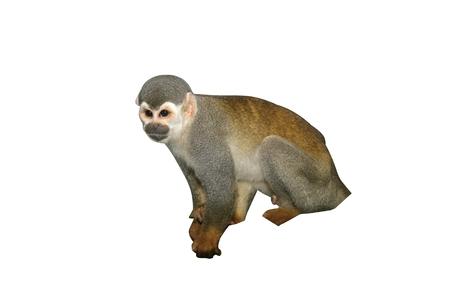 Common squirrel monkey, Saimiri sciureus, single mammal on branch, Brazil Stock Photo