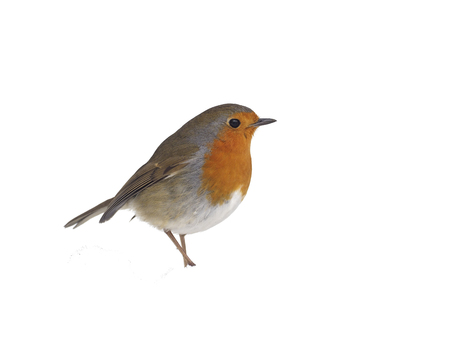 Robin, Erithacus rubecula, single bird in snow, Warwickshire, March 2018