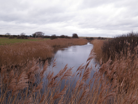 Boyton and Hollesley Marshes, RSPB reserve, Suffolk, January 2019