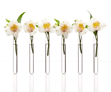 Glass test tubes with white flowers standing in line isolated on white,  can be concept of similarity Imagens