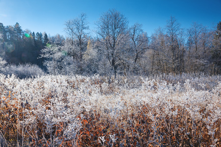 hoar: Nature covered with hoar frost