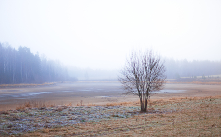 hoar frost: Bare tree on a field covered with hoar frost. Rural landscape with early morning mist.