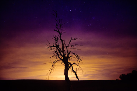 The silhouette of dried tree against astonishing sunset sky with stars