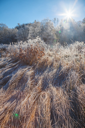 winterly: Nature covered with frost on sunlight Stock Photo