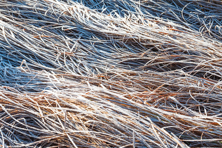 hoar: Grass covered with hoar frost Stock Photo