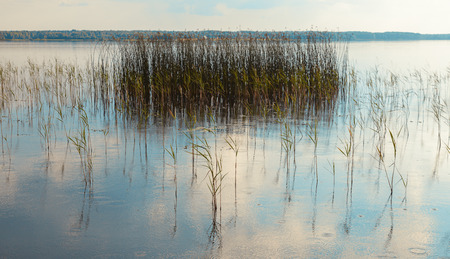 Landscape of the lake with reeds