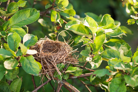 birds in tree: Empty bird nest on a tree branch covered with green leaves, copy space Stock Photo