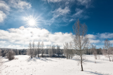 glistening: Snowcapped trees in the glistening sunshine, wonderful winter day