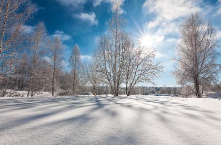 glistening: Snowcapped trees in the glistening sunshine, sunny winter day