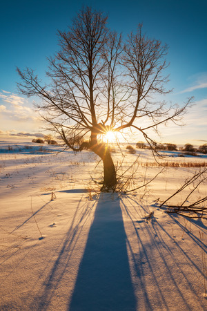 winterly: Sunbeams breaking through  tree in winter field, straight blue shadows on smooth snow surface.