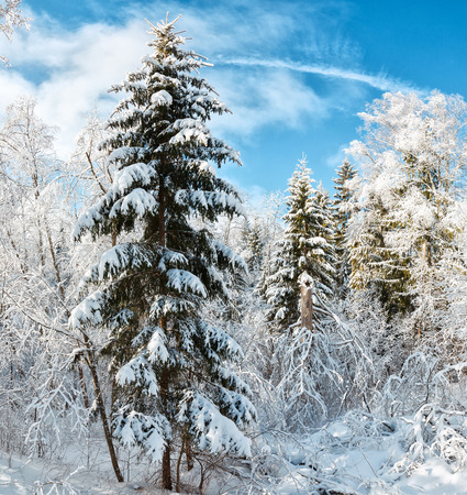 winterly: Winter forest with thick snow covering trees