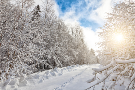 winterly: Winter landscape with thick snow covering forest and trail stretching ahead Stock Photo