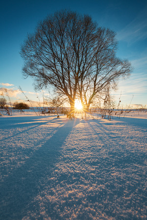 breaking through: Sunbeams breaking through  tree in winter field, straight blue shadows on smooth snow surface.