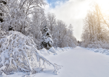winterly: Winter landscape with thick snow covering forest and road stretching ahead Stock Photo